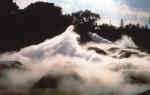 国立昭和記念公園「霧の森」 / Fog Forest Showa Emperaor's National Memorial Park